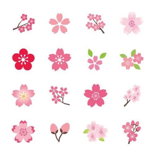沢山の品種がある桜。新しい品種もあります。