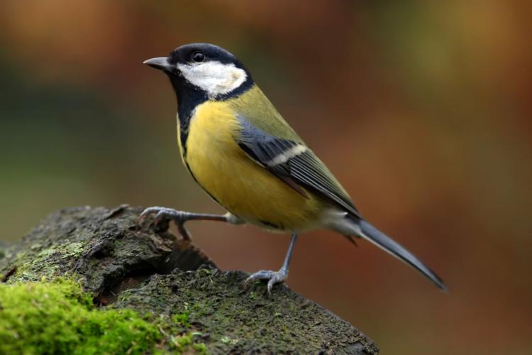小鳥がさえずる爽やかな春、とは程遠い春という季節。
