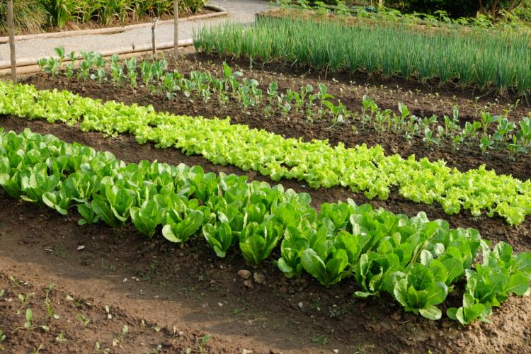 長年人気の趣味である家庭菜園を始めるなら今かも?