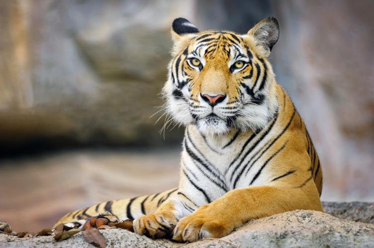 3人がいると言えば、実在しない虎もいることになる