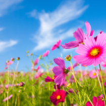 春が待ちきれない!そんな方も多いのではないでしょうか。