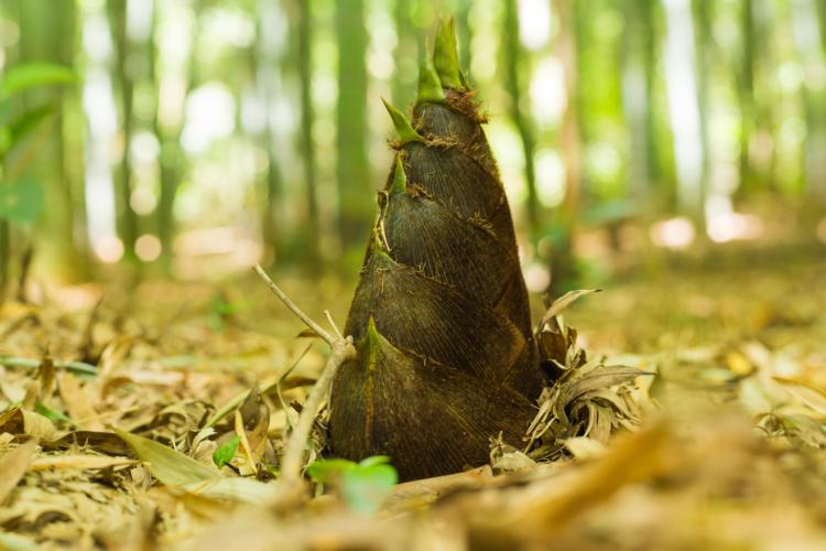 タケノコも手に入り易い食通も唸るこの時季