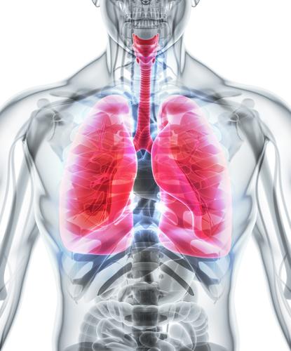 前述の煙草と肺がんとの関係性は認められていないというデータも…