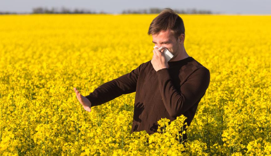 ブラッシングは基本的に、家の中に花粉を持ち込まない様にするために使います。