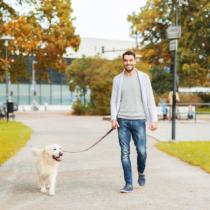 犬の散歩の諸問題