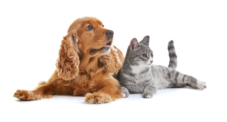 子供のいる夫婦と子供のいない夫婦では、子供のいない夫婦の方が犬やネコといったペットを飼っている率が高いと思いませんか。