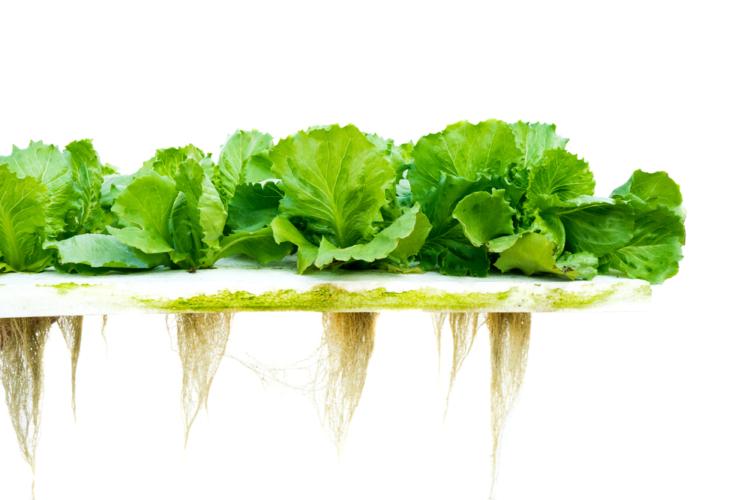 流行の家庭菜園は初心でも案外と簡単に収穫できる野菜であれば十分楽しめるもの