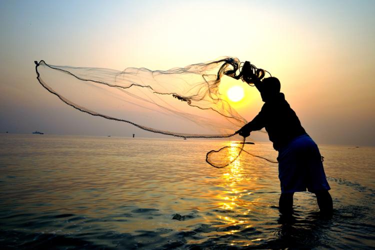 5月に旬を迎える魚には「アジ」「イサキ」「カツオ」「メバル」などがあります。