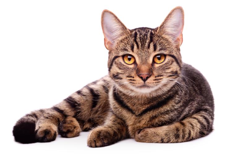 野良猫問題は時として深刻な事態を招いています。
