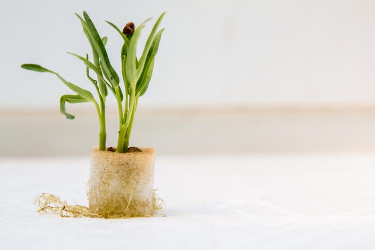 水耕栽培で出来る野菜