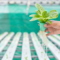 水耕栽培のノウハウ