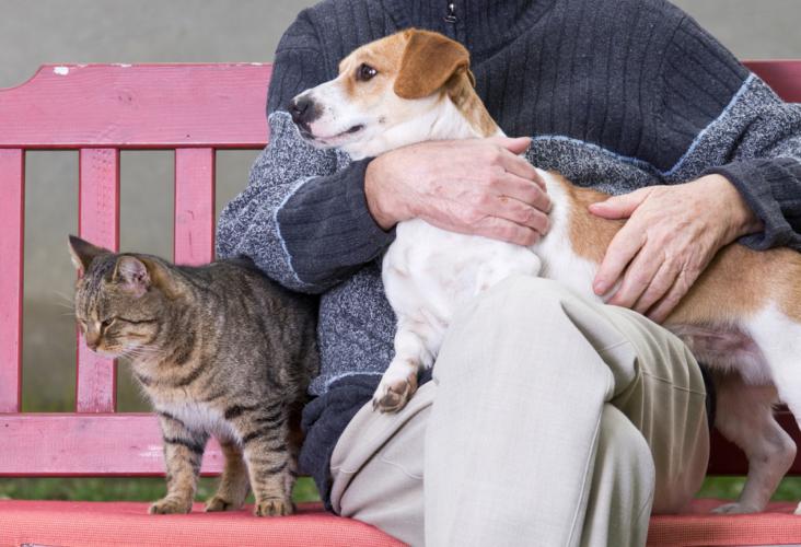 犬猫関係なく飼い主にはちゃんとしてもらいたいものです。
