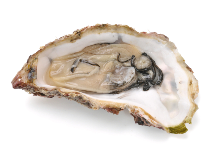 牡蠣を食べると精力が高まる理由とは?
