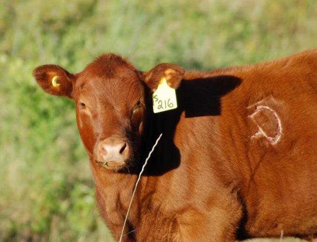 ブランド牛にはブランドらしい対応をする