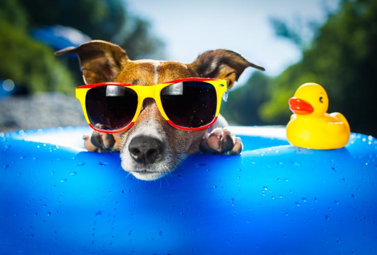 犬の熱中症対策アイテム