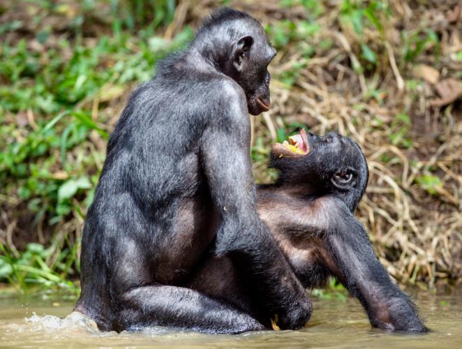 人間以外の生物たちはまさに命がけのセックスで子孫繁栄に勤しんでいる