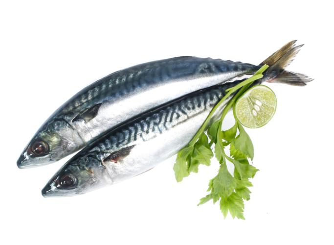 魚油にも高い除脂肪効果があります