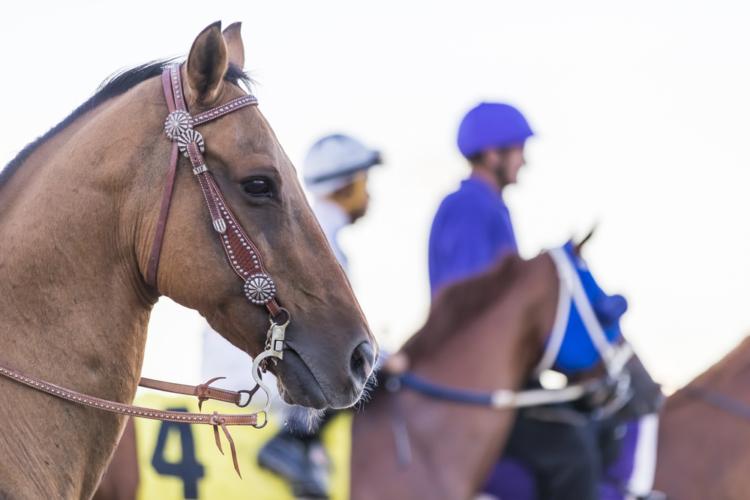 記念一本に絞ってきた馬たちの一発を狙うのが馬券の近道