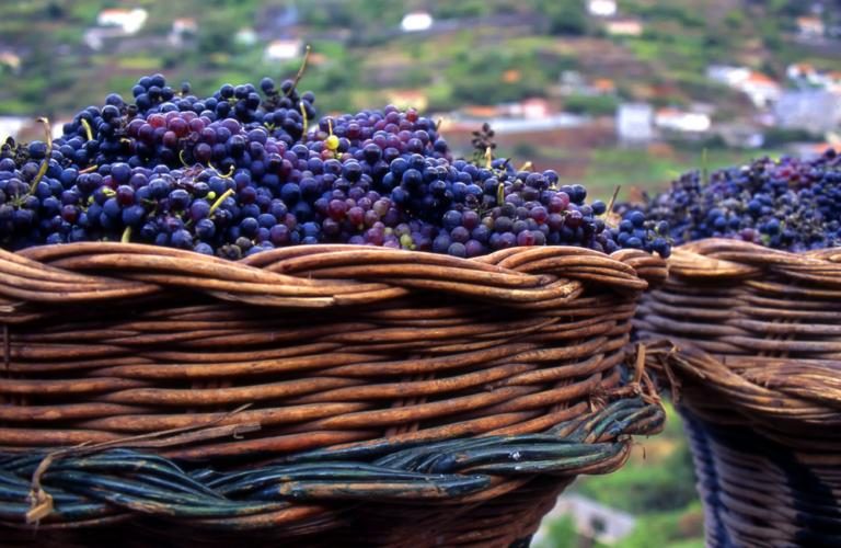 マデイラ・ワインのイメージ