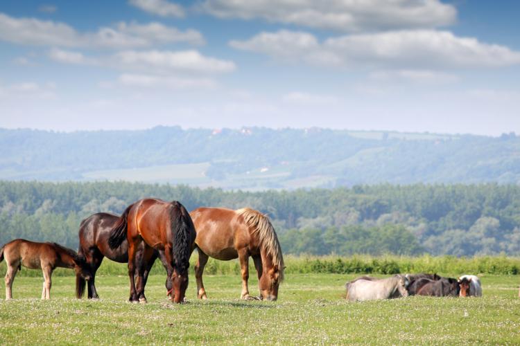 血統表から見える大種牡馬の集積