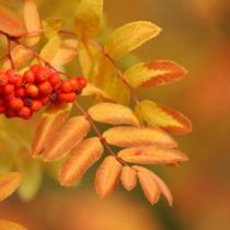 記念日としての秋分の日