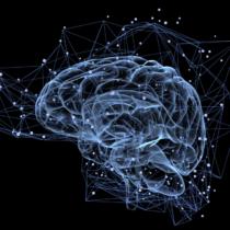 食欲を司る脳