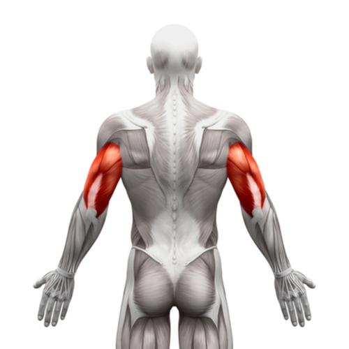 上腕三頭筋は筋トレのバリエーションが重要