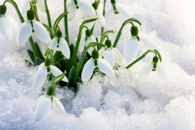 冬物はもう、終わりの時期