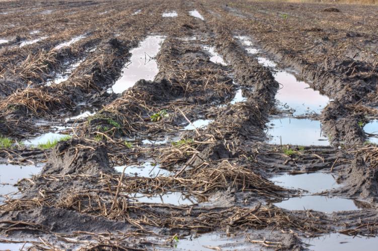 北海道を襲った連続台風による水害でじゃがいも畑が大被害を受けました