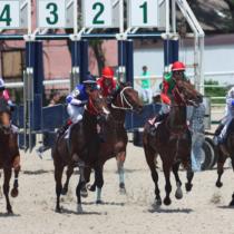 2017年5月12日現在、大井所属の的場文男騎手が地方通算6999勝となり、7000勝の大記録に大手をかけました。
