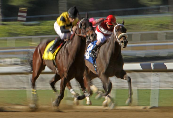 ウマノジョーは伸び盛りの4歳馬です。