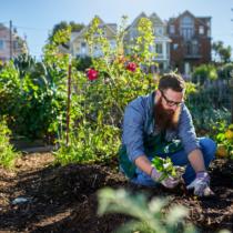 庭仕事は退職後の楽しみとしてそろそろピックアップしているオヤジがいても不思議ではありません。