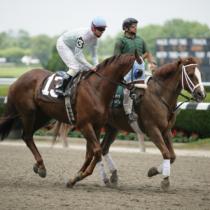 今年も上位人気予想馬にけっこうハマる馬がいます