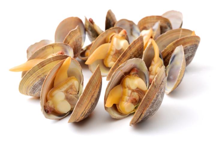 意識的に貝類を摂取してみましょう
