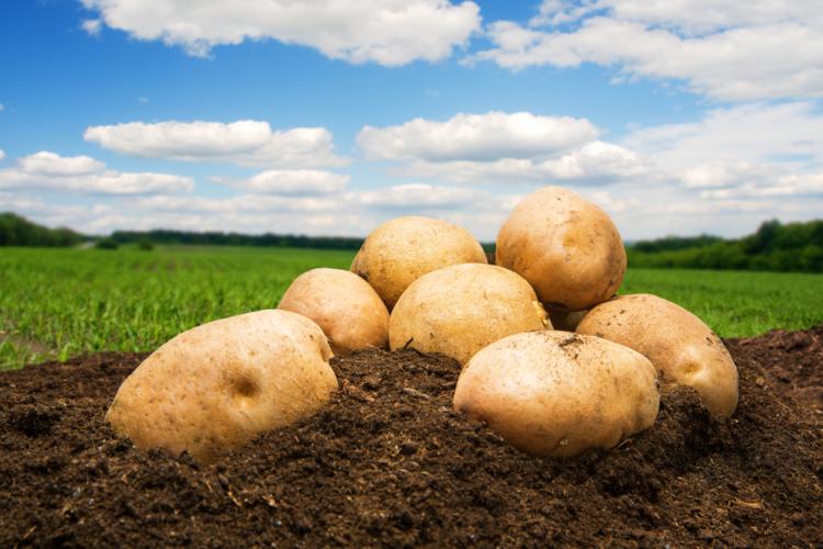 今年国内食品業界で一番の話題といえば「ポテチが消えた」こと