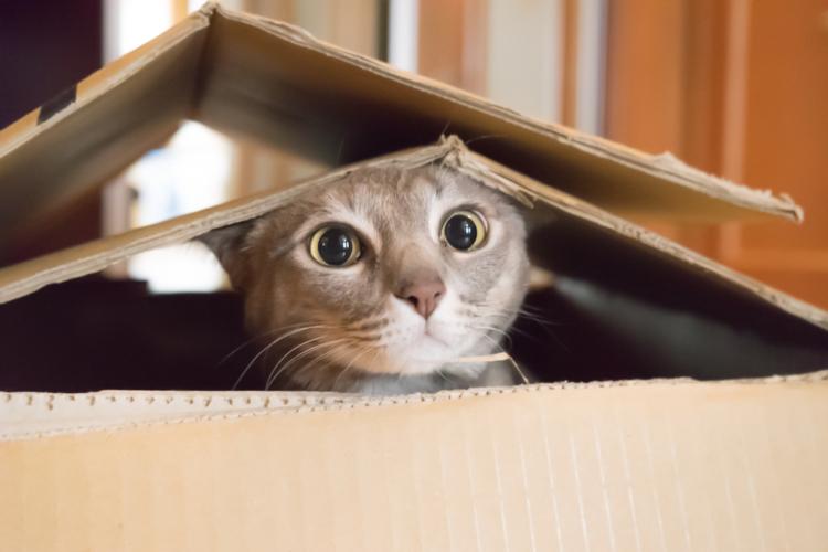 猫も人も不幸になる多頭飼育崩壊