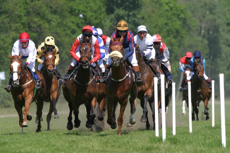 ダービー馬のいない菊戦線を盛り上げるのは、はたしてどの馬か?