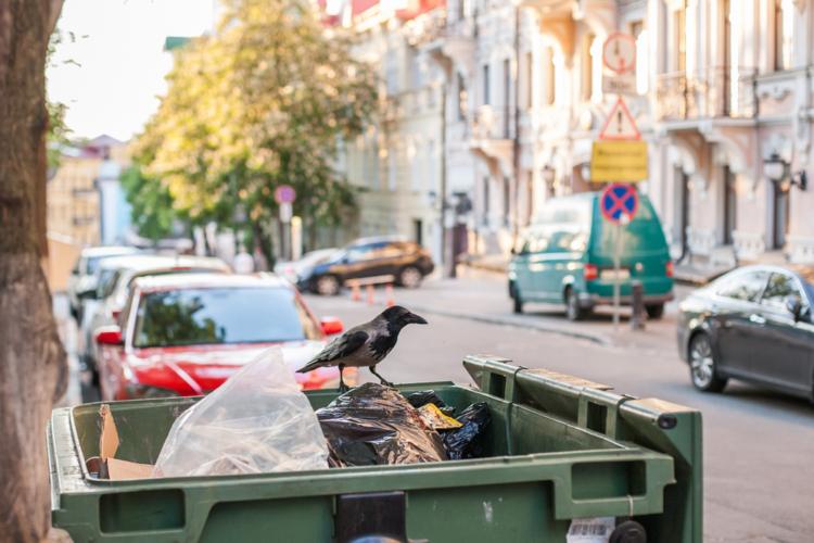 ゴミの日の天敵「カラス