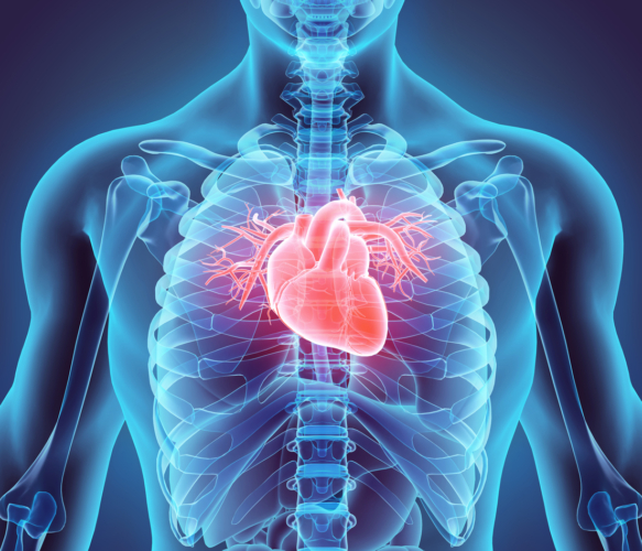 優れた血管保護効果
