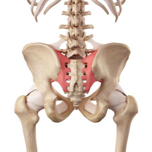 仙腸関節が原因で起きる、ぎっくり腰