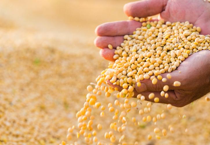 大豆の栄養価の高さ