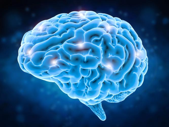 高次脳機能障害は脳血管疾患によって発症することがほとんど