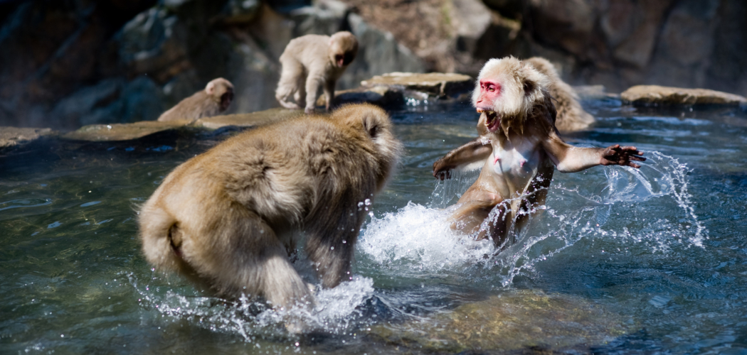 猿山だけの話ではない、蔓延するマウンティング