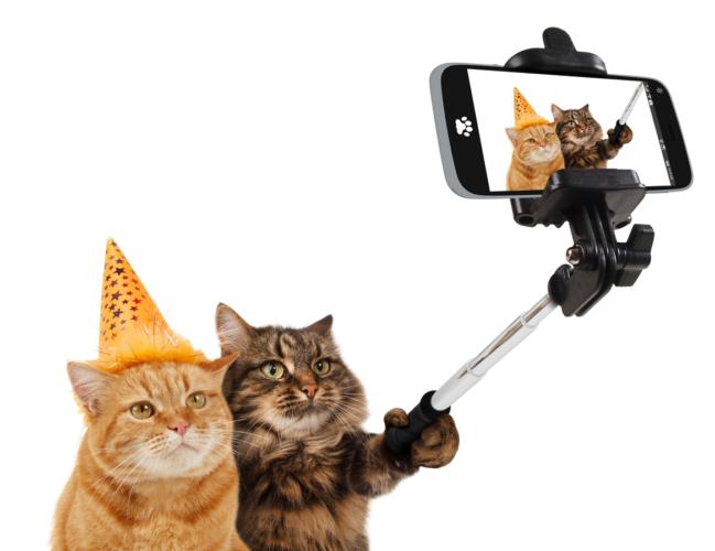 ペットに猫が増えた背景