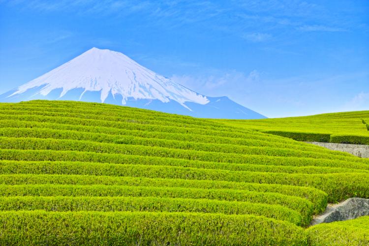 日本人なら緑茶やろ!