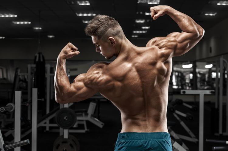 筋肥大における遺伝子の影響力