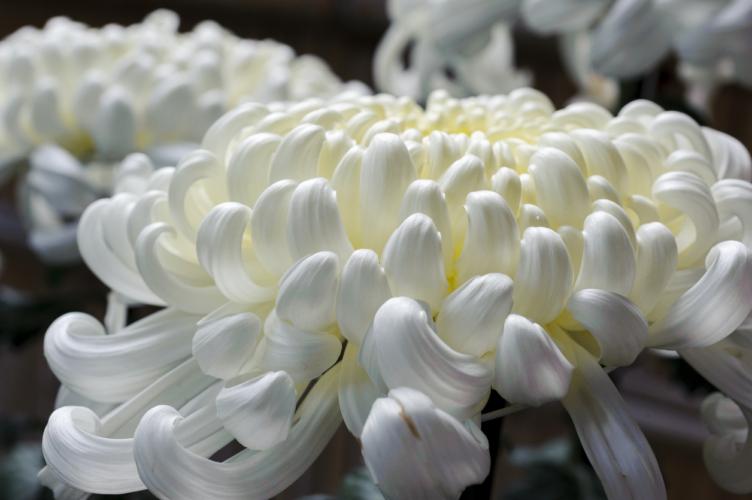 供花する花の選択